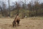 Cyrk Safari w Jodłowej