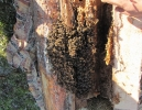 Gospodarstwo pszczelarskie BONIKA